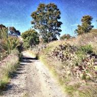 Camino cerca de la cantera de San Lorenzo.