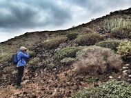 El negro del suelo hace más luminoso el verde de cardones, tuneras y tabaibas. / LUIS ROCA ARENCIBIA