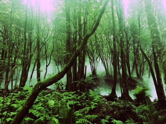 Bosque de Anaga / ENRIQUE LÓPEZ LAVIGNE